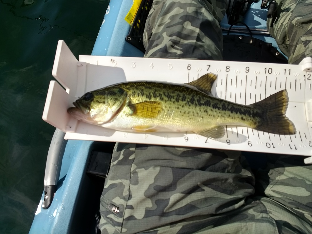 Largemouth1 1