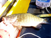 15 inch small mouth bass 07 17 10 thumb