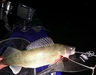 Walleye boat thumb